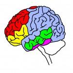 Защо е важно развитието на ума на детето в ранна детска възраст.
