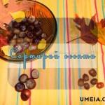 Сортирай есента