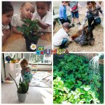 Грижата за животните и растенията в Монтесори обучението